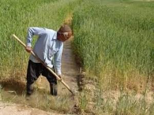 ایجاد ۳۸ مرکز کشاورزی در سیستان و بلوچستان