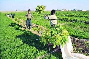 ۱۰۰ درصد تعهد اشتغال در بخش کشاورزی استان قزوین محقق شد