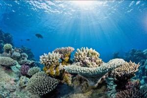 آشنایی با رشته اقیانوس شناسی