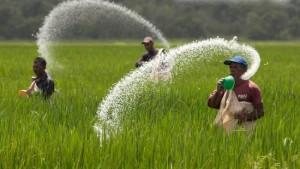۳۲ درصد اشتغال فعال آذربایجان غربی در بخش کشاورزی است